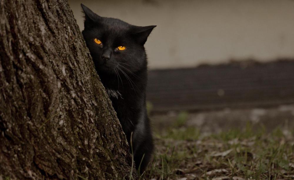 gatto-nero-165217.jpg