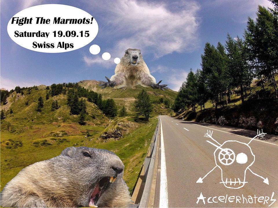 fight le marmotte.jpg