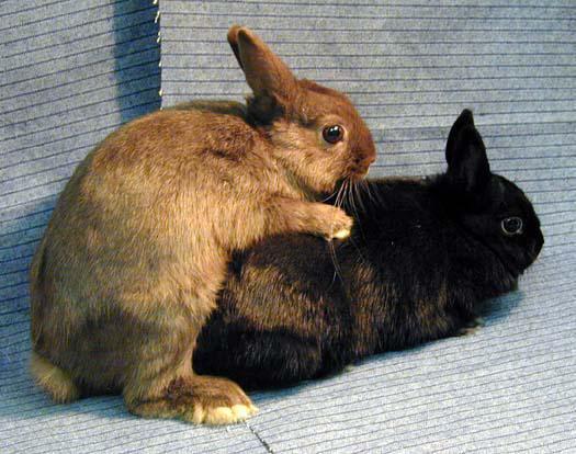 mating_rabbits.thumb.jpg.5e4c551f6f84256