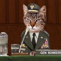 cat-general-120-3-_tplq-200x200.jpg.242a
