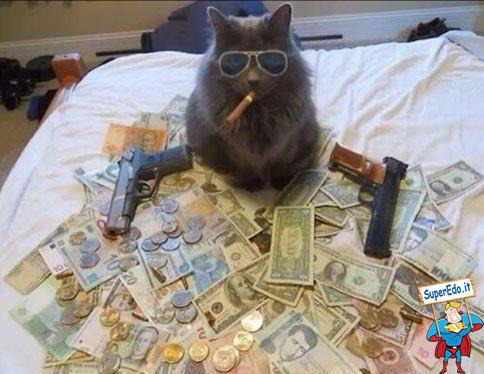 gatto_boss_pieno_di_soldi.jpg.541fb8a697