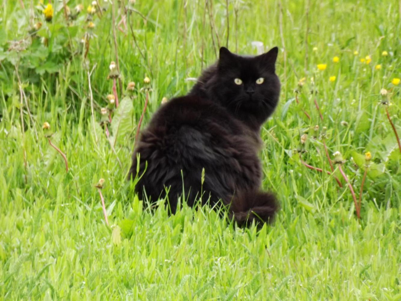 Black_pussy_-_panoramio.jpg